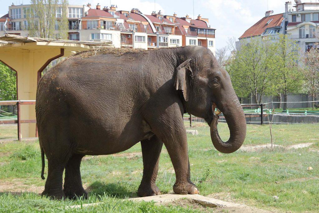 Asian elephant by M. Fens