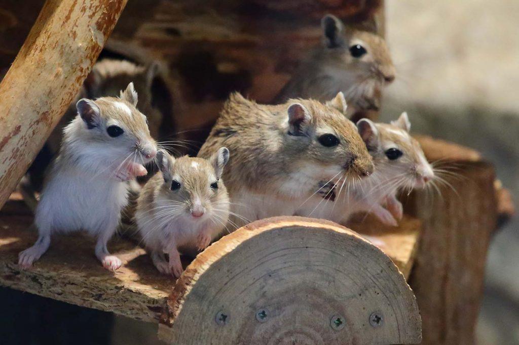 Ebony mice by M. Fens