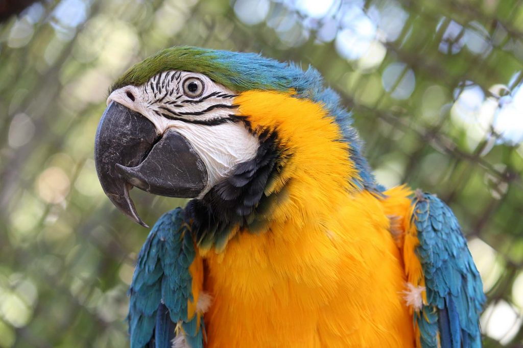 Blue-and-yellow macaw by K. Zareva