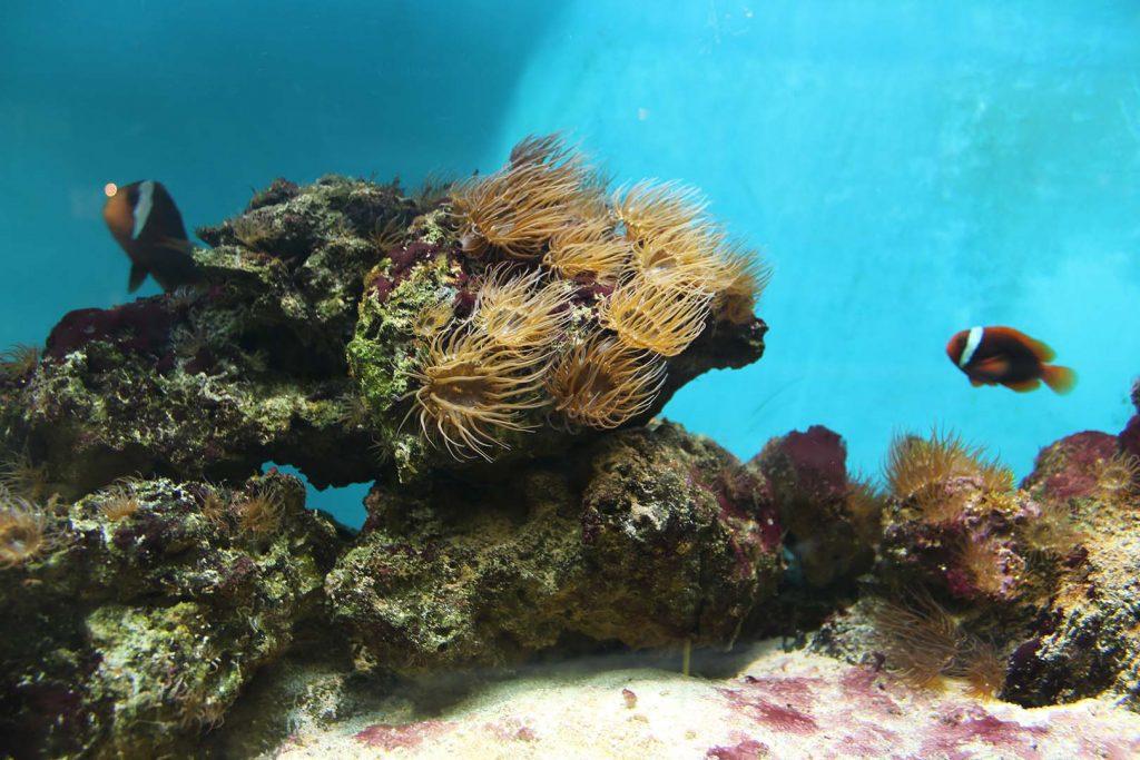 Sea aquarium by K. Zareva