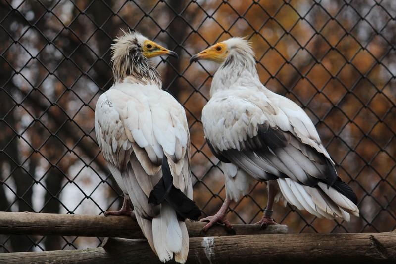 Нови животни в Софийския зоопарк