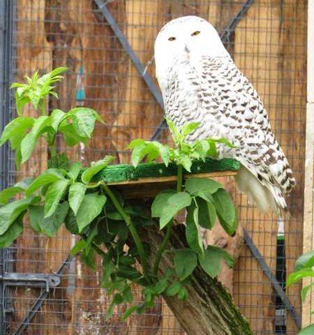 Нова волиера в Софийския зоопарк