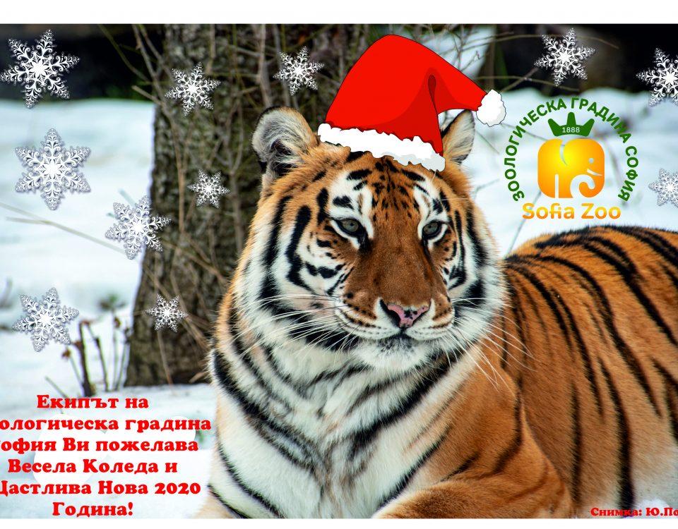 Зоологическа градина София - Коледа и Нова Година