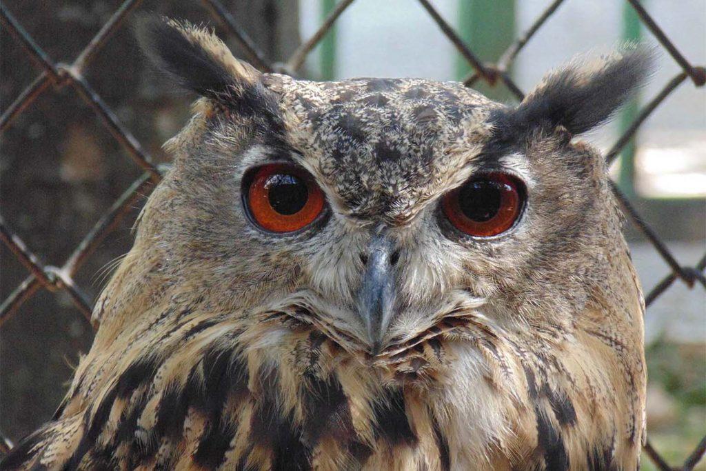 Eagle-owl by M. Aleksandrov