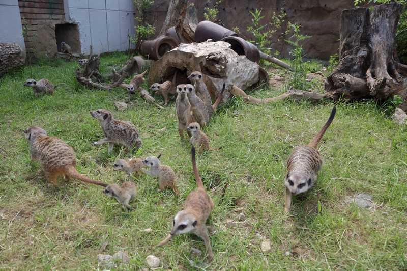 Софийският зоопарк се нуждае от доброволци