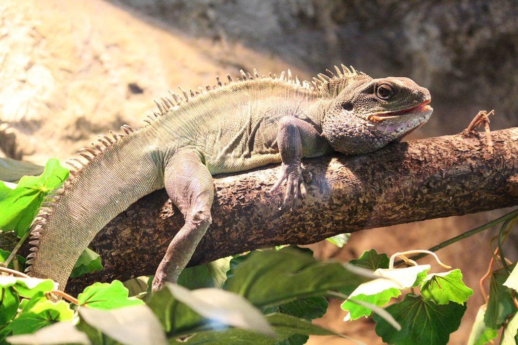 Китайски воден дракон сн. К.Зарева